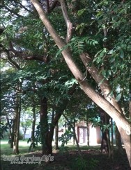 森林浴 稲美町 こだわりの庭