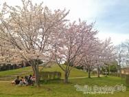 桜 スマイルガーデン 庭デザイン