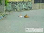 スマイルガーデンディーズ 猫 現地調査の帰り道 大久保町