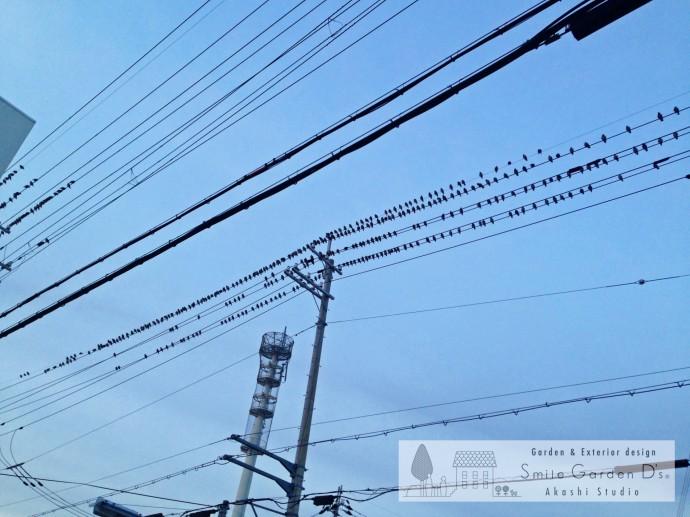 スマイルガーデン 鳥の大群 大久保町