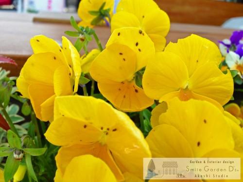 スマイルガーデン 植栽 虫対策