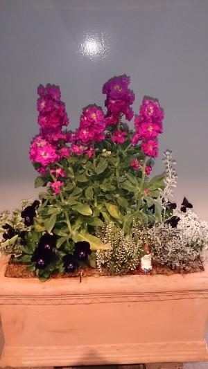 冬バージョンの花