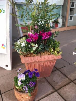 加古川 明石 スマイルガーデン 花壇 お花