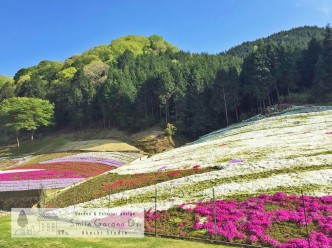 スマイルガーデン大久保 芝桜