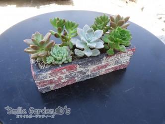 寄せ植え 鉢植え スマイルガーデン明石