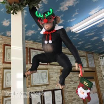 クリスマス飾り 稲美 カーポート