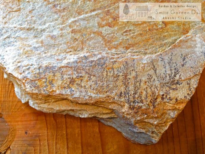 スマイルガーデン 乱形自然石 化石