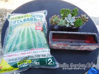 サボテン 多肉植物 スマイルガーデン加古川