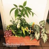 季節の寄せ植え 稲美町 ガーデンルーム