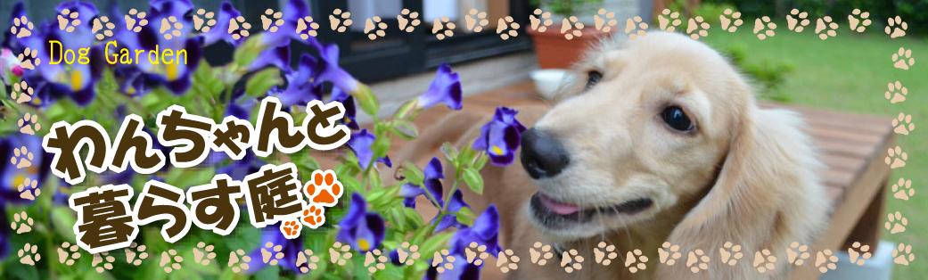 加古川市、高砂市、播磨町、稲美町、明石市・大久保・大久保町にお住まいの愛犬家のみなさまへわんちゃんと暮らすお庭のご提案です。